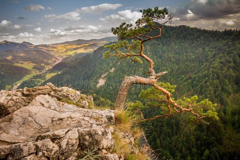 Mountain View, panorama della montagna, fiume della montagna, viaggio alle montagne fotografia stock libera da diritti