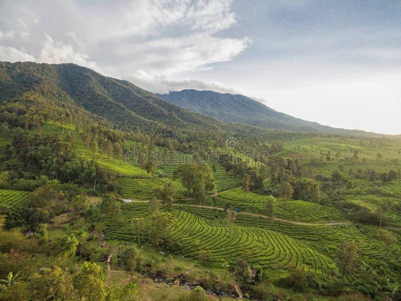 Mountain View Puncak, Bogor Indonesien royaltyfria bilder