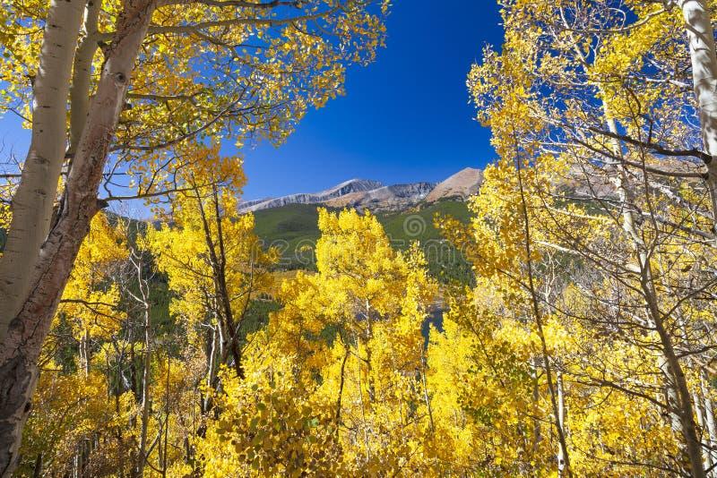 Mountain View scenico attraverso le tremule fotografia stock