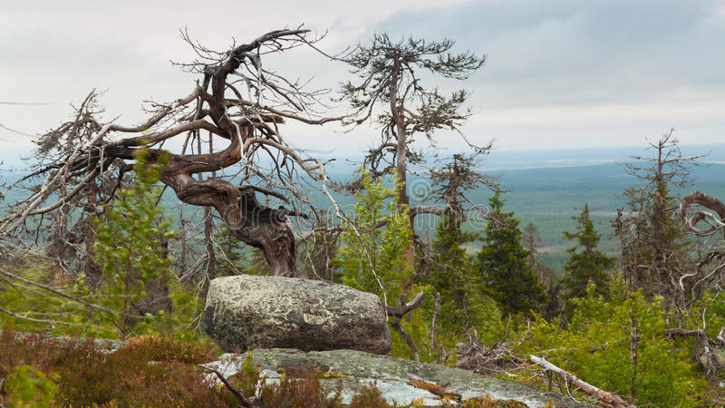 Mountain Vottovaara. Natural landscape of the Mountain Vottovaara in Karelia (Russia royalty free stock photography