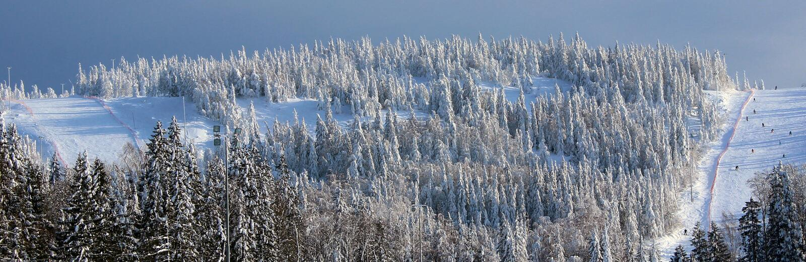 Mountain winter forest stock photography