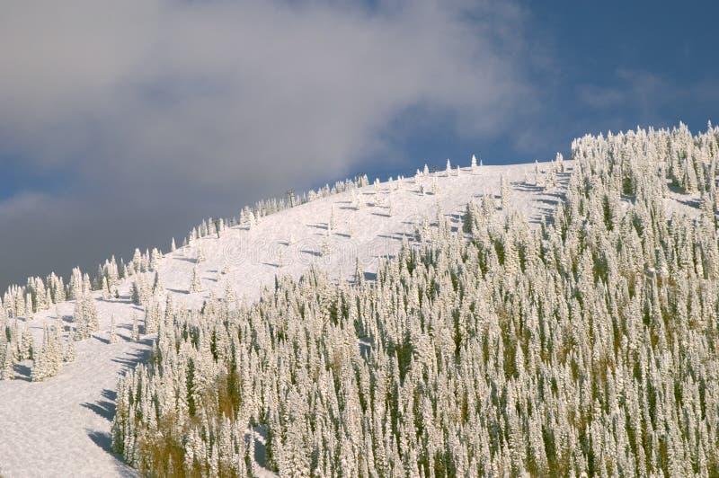mountain zalesiona zimy. zdjęcie stock