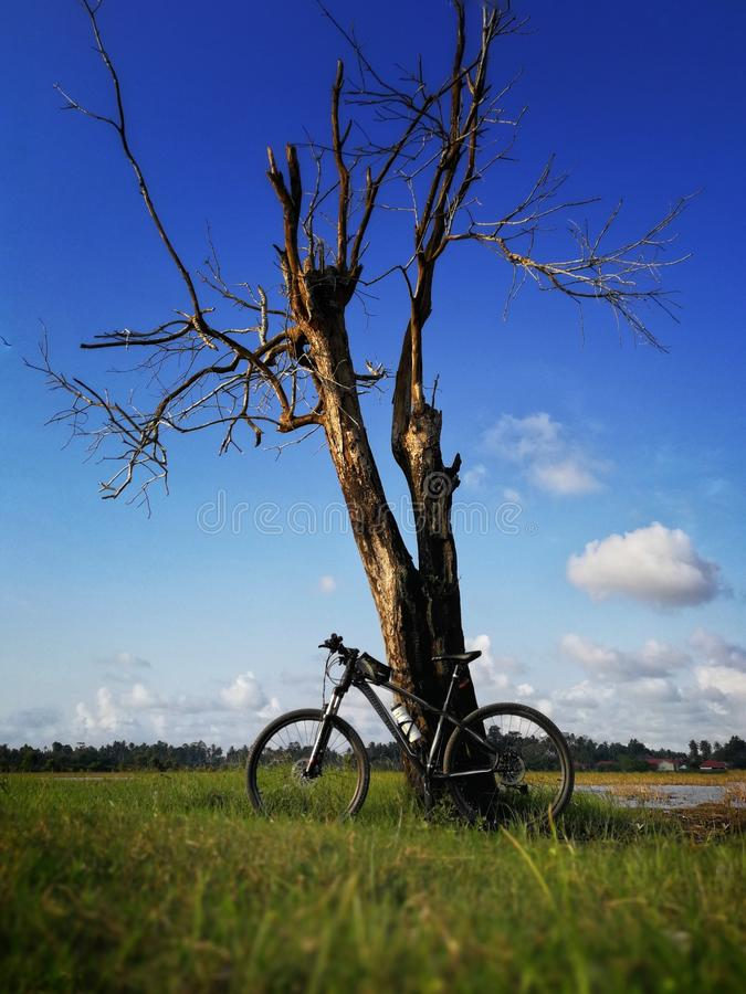 mountainbike de cycliste sur le ciel bleu et fond sur l'arbre image libre de droits