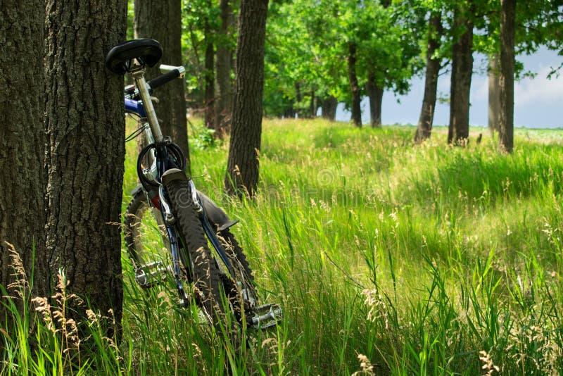 Mountainbike nahe einem Baum in einer Waldlichtung lizenzfreies stockbild