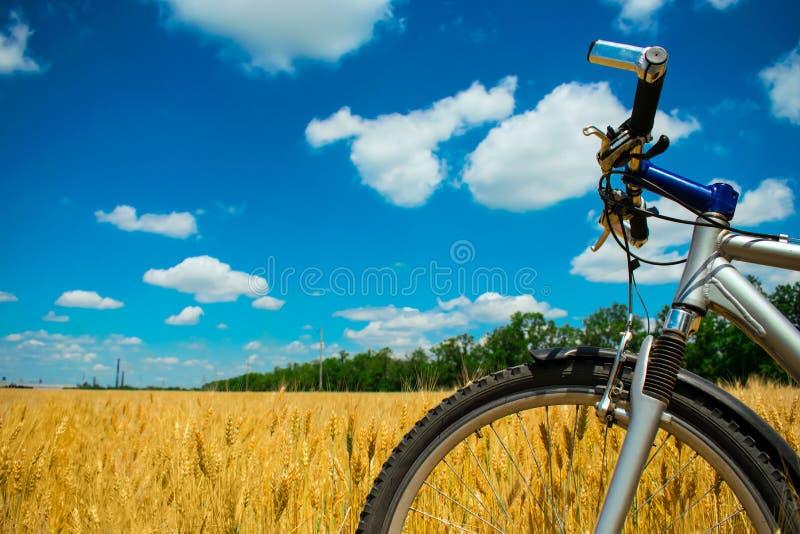 Mountainbike på gult vetefält under blå himmel med moln arkivbilder