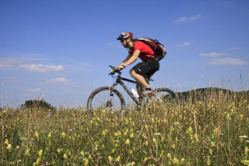 Mountainbiker fotos de stock
