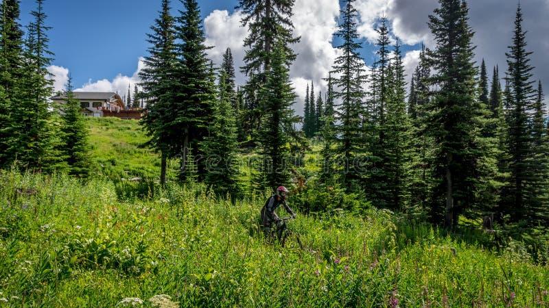 Mountainbiker, der unten durch die Wiese mit alpinen Blumen kommt lizenzfreies stockbild