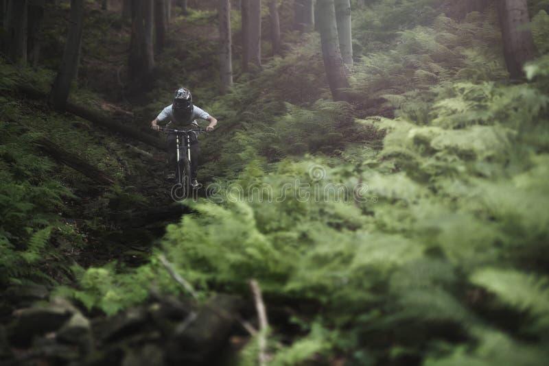 Mountainbiker Forest Bike Downhill photo libre de droits