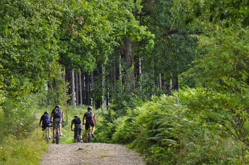 Mountainbikers in una foresta fotografie stock libere da diritti