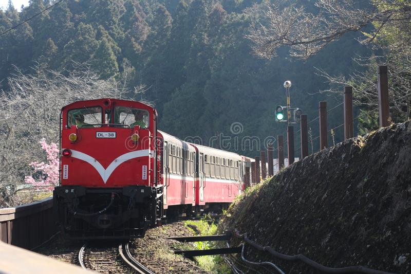 Jungle train on Ali Mountain. A mountaineering train that runs through the jungle in Ali Mountain is surrounded by cherry trees royalty free stock photography