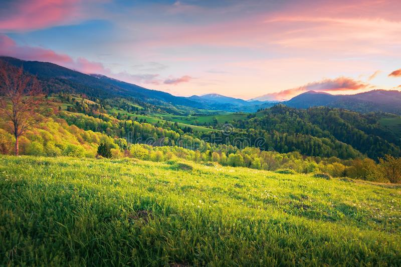 Mountainous springtime countryside at sunset stock photography