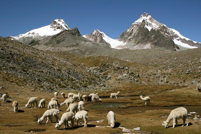 Mountains and animals stock photos