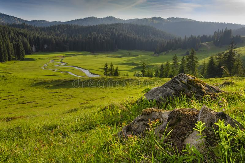 Mountains Apuseni. Landscape mountain river with trees and meadow in summerGalbena river.Romania Apuseni.Nature background.Landscape beautiful stock image