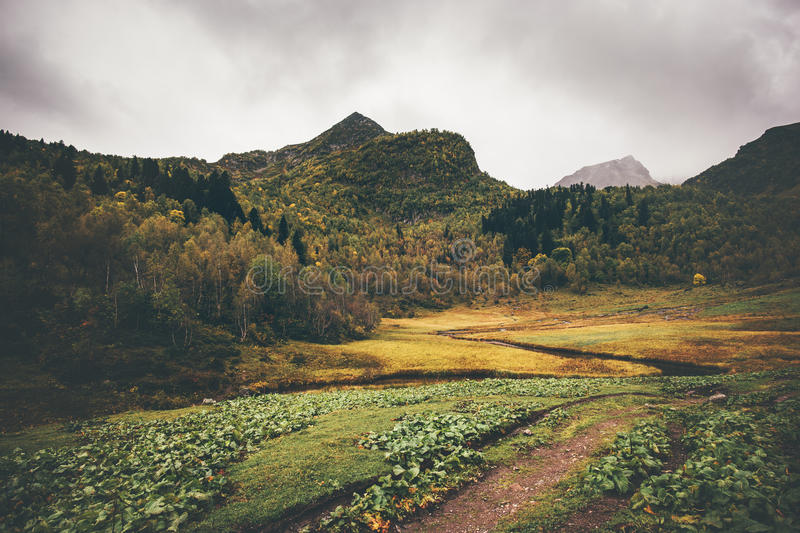 Mountains and autumn Forest Landscape royalty free stock photos