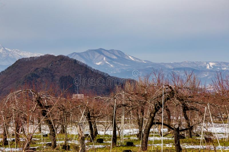 Mountains behind the apple orchard. The mountains seen behind an apple orchard in Yamanouchi, Nagano Prefecture, Japan. Nagano is well known for the mountains stock photography