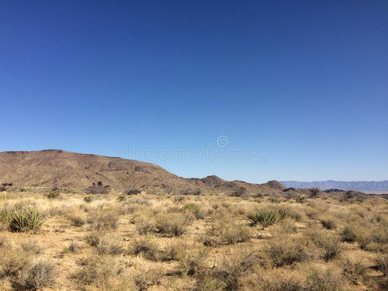 Mountains and cacti in the Arizona desert under the blue sky.  royalty free stock photo