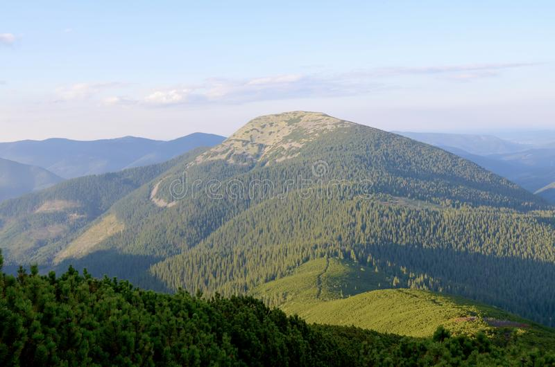 Mountains Carpathians. Ukraine. Forest. On high. Summer day. royalty free stock image