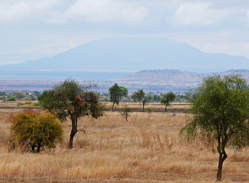 Mountains in the clouds. Cloudy sky in Tanzania, Yellow earth in Africa, Africa, to meet adventures, safaris, Tarangiri, drought, Ngorongoro,gray earth, the stock image