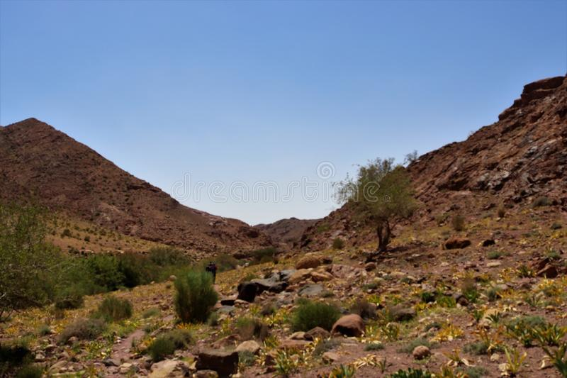 Mountains in the desert. Clear sky, two mountains a some grasses in the desert stock photo