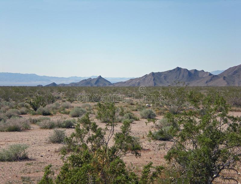 Mountains and Desert Shrubs on a Clear Day. Amboy, California royalty free stock photo