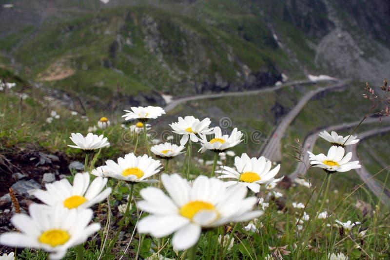 Mountains flowers stock photos