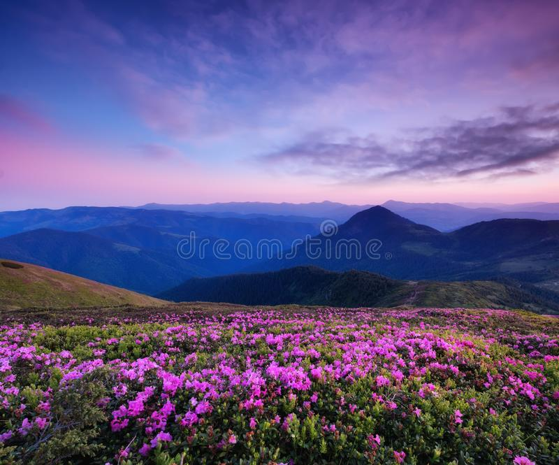 Mountains during flowers blossom and sunrise. Flowers on the mountain hills. royalty free stock photography