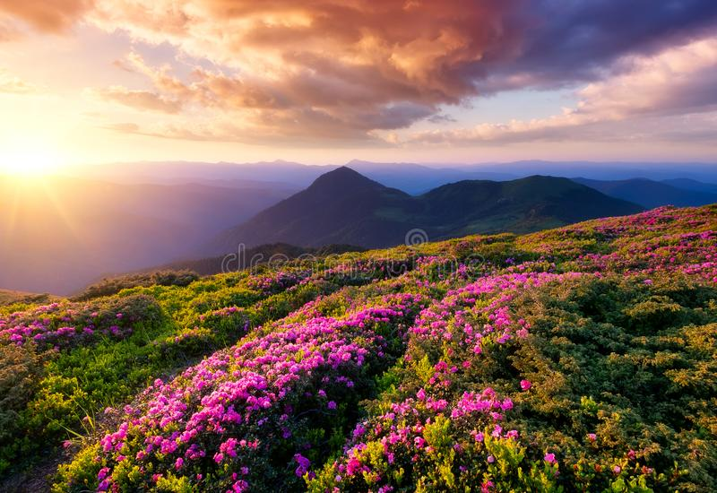 Mountains during flowers blossom and sunrise. stock images