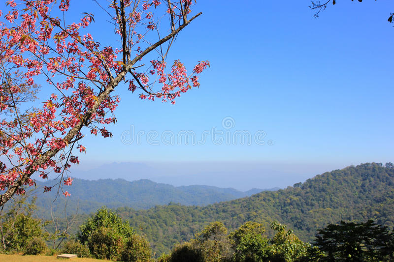 Mountains and flowers royalty free stock photo