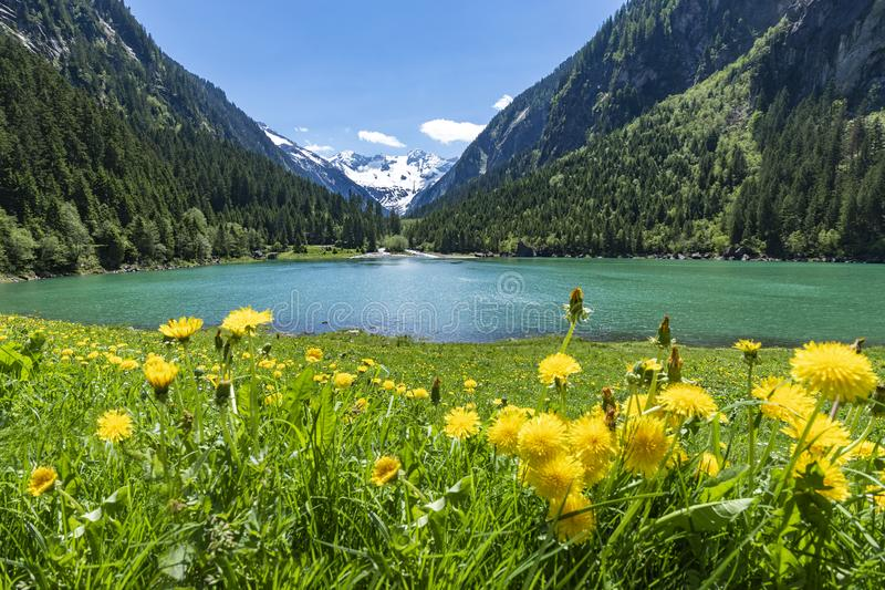 Mountains and lake landscape with flower meadows in early summer. stock photography