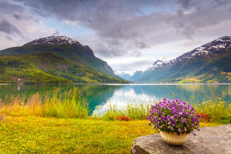 Mountains landscape, fjord and rest place, Norway. Tourism vacation and travel. Serene mountains landscape, rest place table with bunch of flowers on fjord shore royalty free stock image