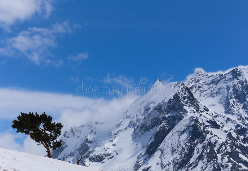 Mountains landscape with lonely tree royalty free stock photo
