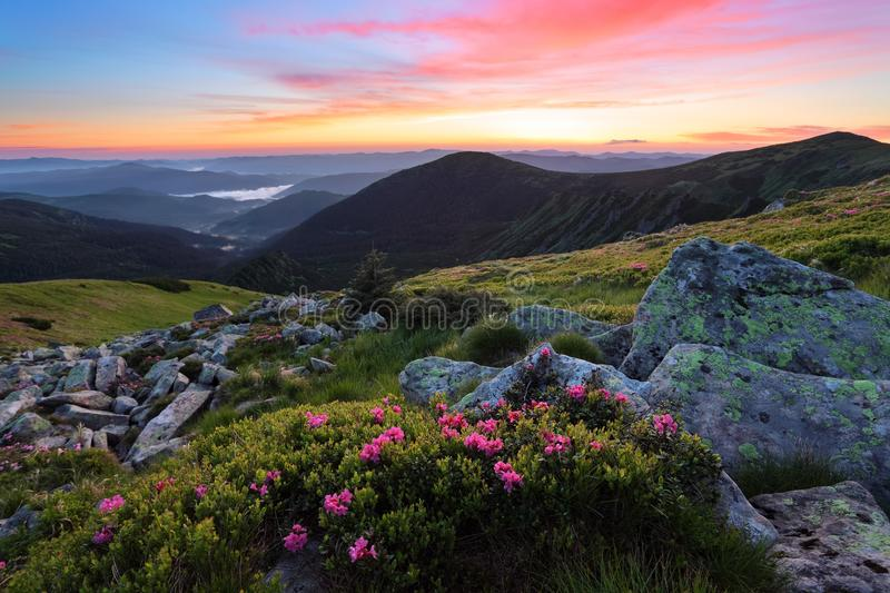 Mountains landscapes. Scenery of sunrise with beautiful colorful sky. Lawn with rhododendron flowers. royalty free stock images