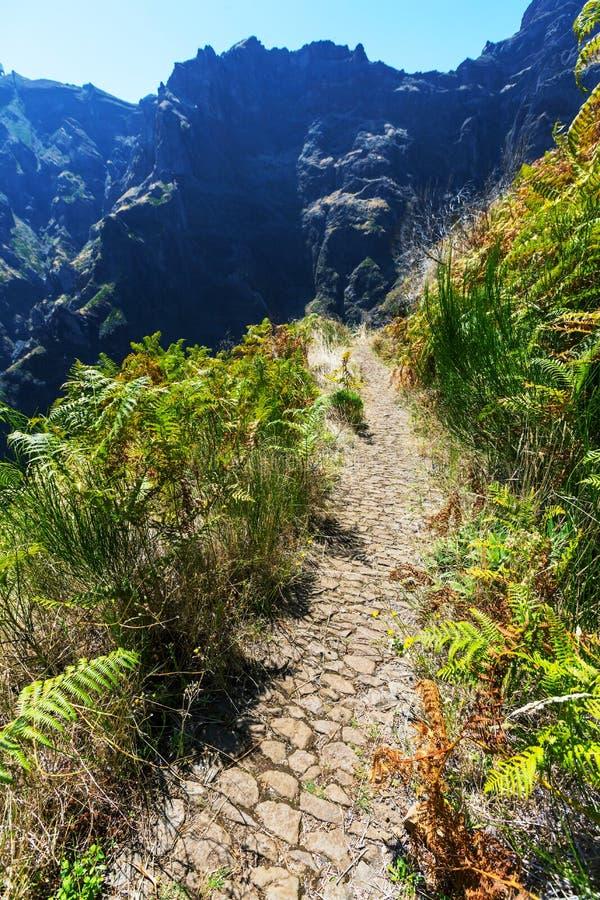 Mountains in Madeira royalty free stock photo