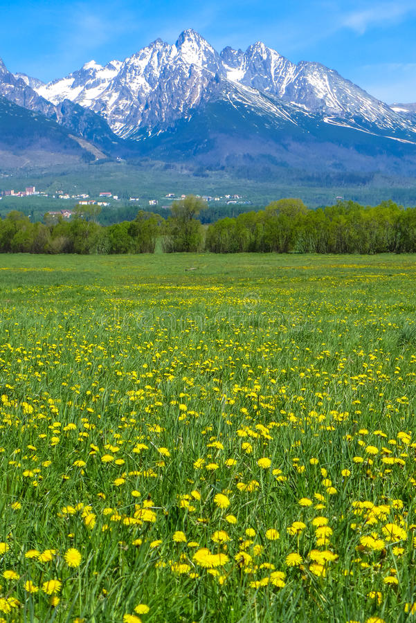Mountains and meadow royalty free stock photo