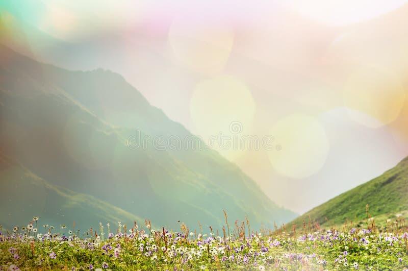 Mountains meadow royalty free stock photo