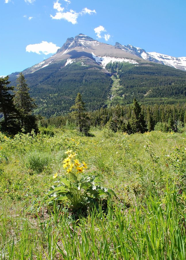 Mountains and meadows. Mountains and hillside grassland in waterton lakes national park, alberta, canada royalty free stock images