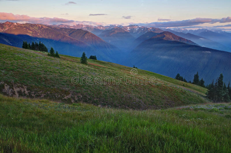 Mountains and meadows at sunset, Olympic National. Sunset at Hurricane Ridge in the Olympic National Park, Washington state. Green meadows, wildflowers royalty free stock images