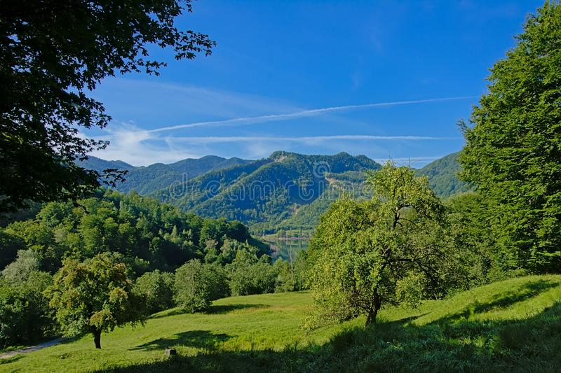 Mountain peaks with forests and apple trees in the foreground on a sunny morning in the Transylvanian countryside royalty free stock photo