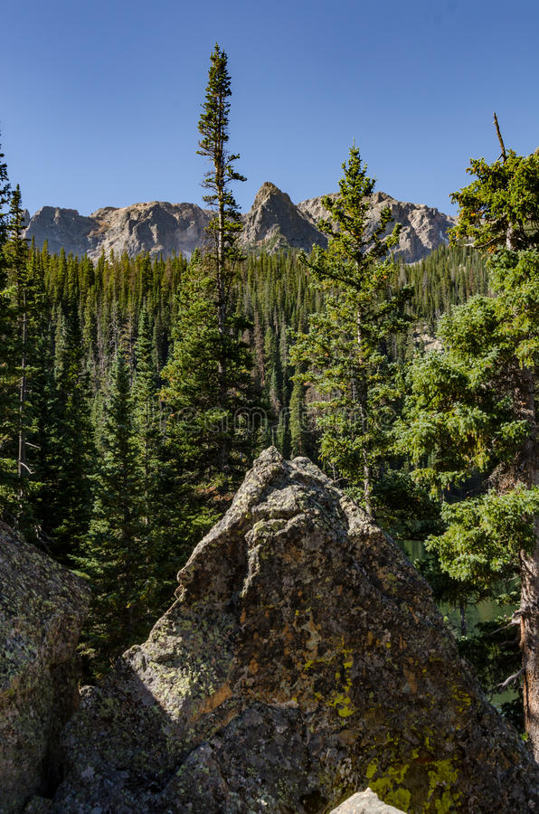 Mountains Peek Out Over Pine Trees Vertical. Mountains peek out over pine trees in the Rocky Mountains stock image