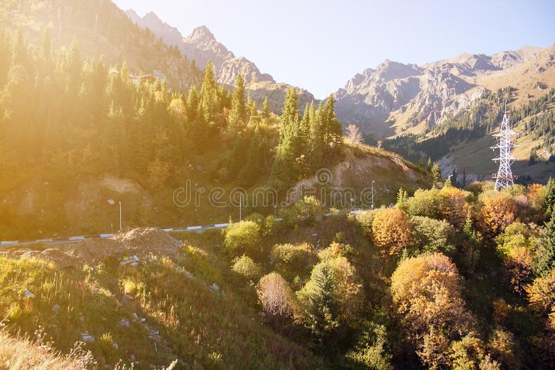 The mountains pine forest in sunny weather. Travel and adventure in summer or autumn. The mountain river. The concept of freedom a. Nd wildlife. Almaty stock photo