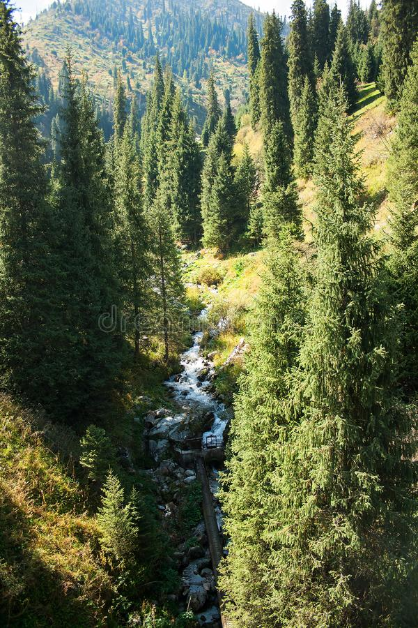 The mountains pine forest in sunny weather. Travel and adventure in summer or autumn. The mountain river. The concept of freedom a royalty free stock photo