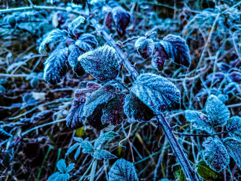 Mountains plants with hoarfrost royalty free stock photography