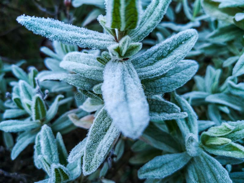 Mountains plants with hoarfrost stock photos