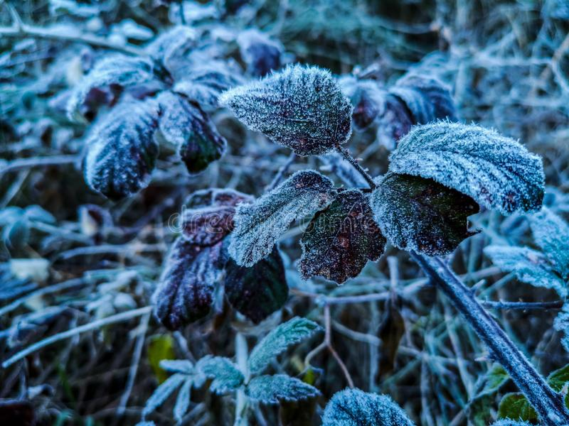 Mountains plants with hoarfrost stock photography