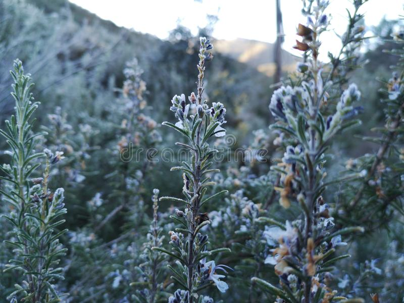 Mountains plants with hoarfrost royalty free stock photos