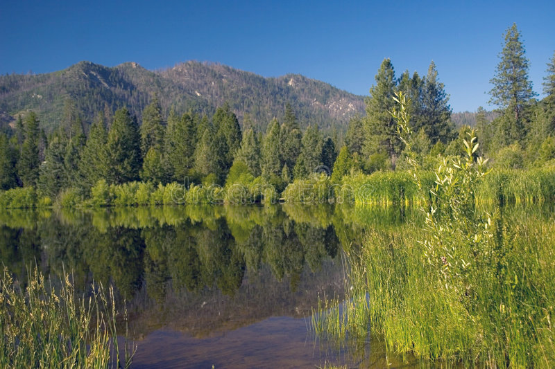 Download Mountains And Reeds Stock Image - Image: 919801