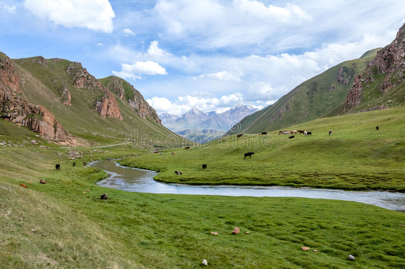 Mountains, river and farm animals, Tien Shan. Kyrgyzstan stock image