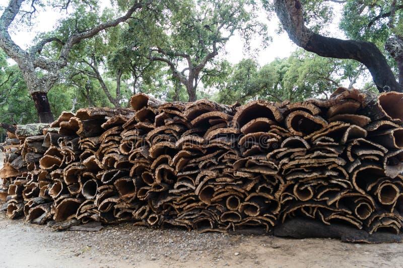 Cork oak bark stock image