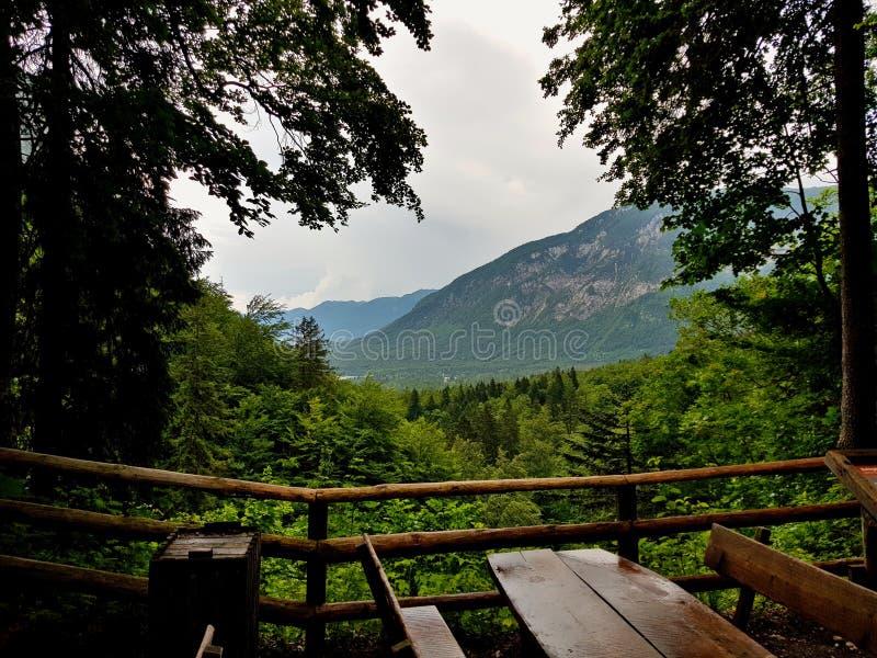 Mountains Slovenia, Travel , Threes, royalty free stock photo