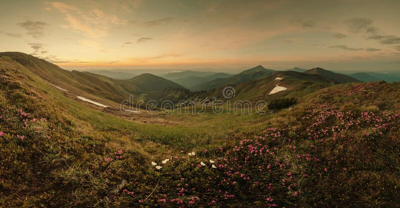 Mountains on summer landscape panorama with rhododendron stock image